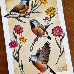 black throated finch giclée Print